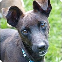 Adopt A Pet :: Zip - Toronto/Etobicoke/GTA, ON