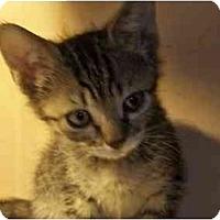 Adopt A Pet :: BabyGirl - Jenkintown, PA