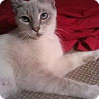 Adopt A Pet :: Blizzard - Lantana, FL