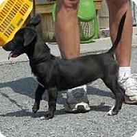 Adopt A Pet :: China - Staunton, VA