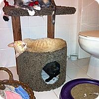 Adopt A Pet :: Gabriella - Cranford/Rartian, NJ