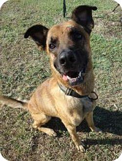 German Shepherd Dog Mix Dog for adoption in Larned, Kansas - Jim