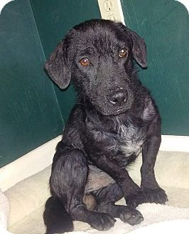 Dachshund Mix Dog for adoption in Ft. Lauderdale, Florida - Barney