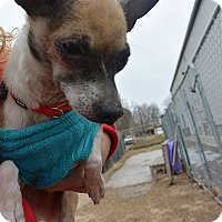 Adopt A Pet :: Bandito - Meridian, ID