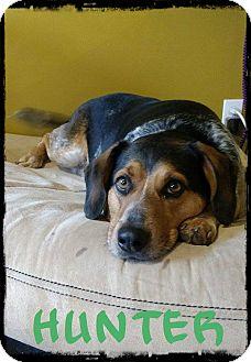 Beagle/Mixed Breed (Medium) Mix Dog for adoption in WESTMINSTER, Maryland - Hunter