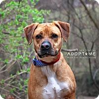 Adopt A Pet :: Ali - Edwardsville, IL
