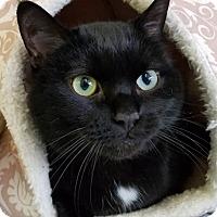 Adopt A Pet :: Zena - Rochester, NY