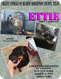 Rottweiler Mix Dog for adoption in Hearne, Texas - Ettie