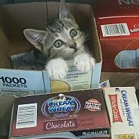 Adopt A Pet :: Trudy - La puente, CA