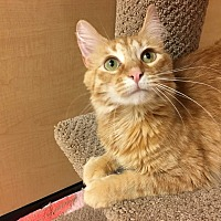 Adopt A Pet :: Cinnamon - Foothill Ranch, CA