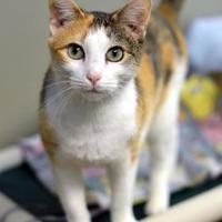 Adopt A Pet :: Orange - Chattanooga, TN