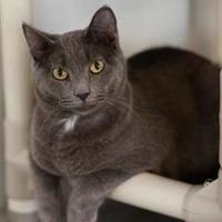 Adopt A Pet :: Bebop - Winona, MN