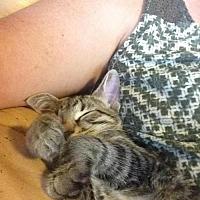 Adopt A Pet :: Fritter - Hallandale, FL