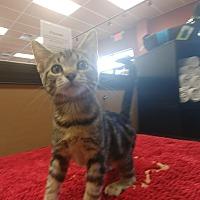Adopt A Pet :: Tia - Turnersville, NJ