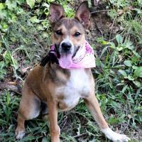 Adopt A Pet :: Tootsie - Dalton, GA