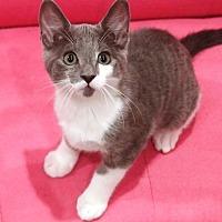 Adopt A Pet :: Doc - Orange, CA