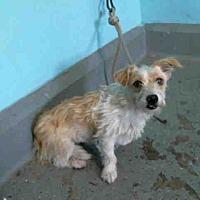 Adopt A Pet :: Kiera - Encino, CA