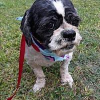Adopt A Pet :: Saturn - Houston, TX
