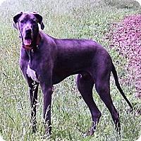 Adopt A Pet :: Dexter - Martinsburg, WV