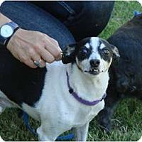 Adopt A Pet :: Gumby - Chandler, AZ