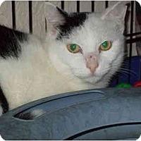 Adopt A Pet :: Dashe - Fort Lauderdale, FL