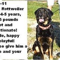Adopt A Pet :: # 549-11 - CRITICAL! - Zanesville, OH
