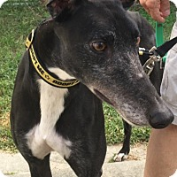 Adopt A Pet :: Cowboy - West Palm Beach, FL