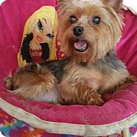 Adopt A Pet :: Mindy - Crump, TN