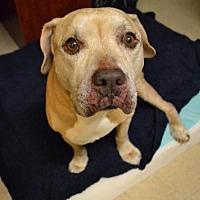 Adopt A Pet :: Monsieur - Dallas, GA