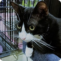 Adopt A Pet :: Lenny - Hallandale, FL