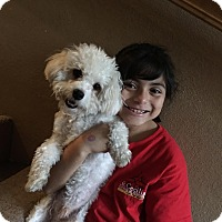 Adopt A Pet :: Zeus - Fountain Valley, CA