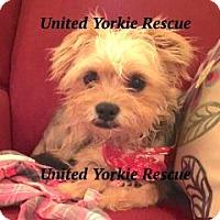 Adopt A Pet :: BIlly - Leesburg, FL