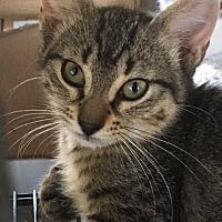 Adopt A Pet :: Basil (KB) 4.15.17 - Orlando, FL