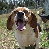 Adopt A Pet :: Nacho - Ashland, VA