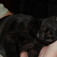 Adopt A Pet :: Channel - Morgan Hill, CA