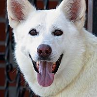 Adopt A Pet :: Rayna von Rauda - Los Angeles, CA