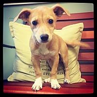 Adopt A Pet :: Brylyn - Grand Bay, AL
