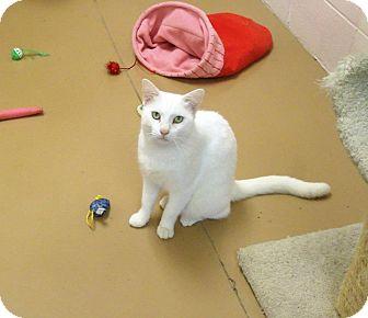 Domestic Mediumhair Cat for adoption in Gadsden, Alabama - Brother