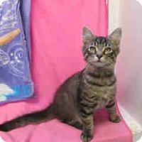 Adopt A Pet :: Hunter - Arlington, VA