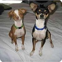 Adopt A Pet :: Peanut - Fairfax, VA