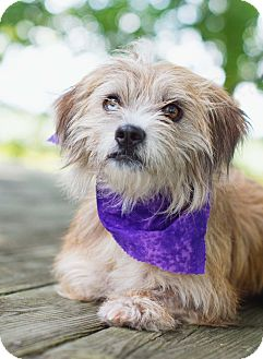 Terrier (Unknown Type, Small) Mix Dog for adoption in Portsmouth, Rhode Island - Matilda-w/video!