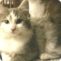 Adopt A Pet :: Maximus - Whitestone, NY