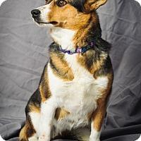Adopt A Pet :: Laura - Inola, OK