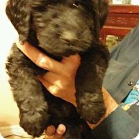 Adopt A Pet :: Dance - Northumberland, ON