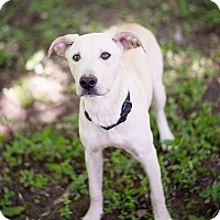 Adopt A Pet :: Sampson - Lewisville, IN