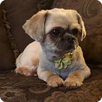 Adopt A Pet :: Stella - Bridgewater, NJ