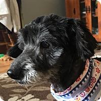 Adopt A Pet :: Heidy - Clayton, CA