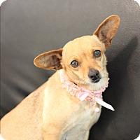Adopt A Pet :: Misty - Dalton, GA