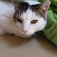 Adopt A Pet :: Justin - Chula Vista, CA