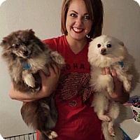 Adopt A Pet :: Thelma & Louise - Norman, OK
